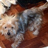 Adopt A Pet :: Winston - Melrose, FL