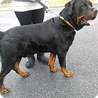 Adopt A Pet :: Legend - Rexford, NY
