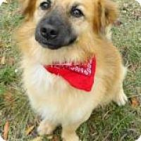 Adopt A Pet :: Brady - Loxahatchee, FL