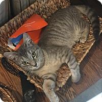 Adopt A Pet :: Flo - Harrison, NY