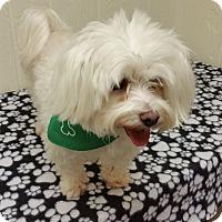Adopt A Pet :: Sammy - Tavares, FL