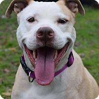 Adopt A Pet :: Gigi - Decatur, GA