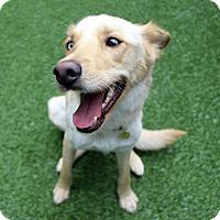 Adopt A Pet :: Marley - Lumberton, NC