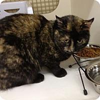 Adopt A Pet :: Ambrosia - Troy, OH