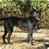 Adopt A Pet :: PRISCILLA - Hagerstown, MD