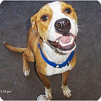 Adopt A Pet :: Primo - Jacksonville, FL