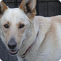 Adopt A Pet :: Bella - Yuba City, CA