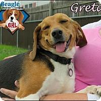 Adopt A Pet :: Greta - Yardley, PA