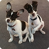 Adopt A Pet :: Hambone & Biscuit - Bonita, CA