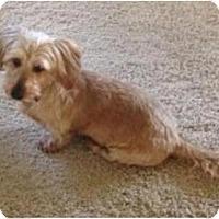 Adopt A Pet :: Gracie - Tucson, AZ