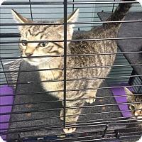 Adopt A Pet :: Aladdin - Richboro, PA