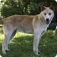 Adopt A Pet :: MASKA - Ile-Perrot, QC