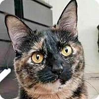 Adopt A Pet :: Sadie - Davis, CA