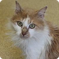 Adopt A Pet :: Dixon - Naperville, IL
