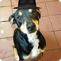 Adopt A Pet :: Banjo - San Antonio, TX
