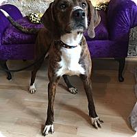 Adopt A Pet :: Carmel - Milwaukee, WI