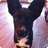 Adopt A Pet :: Tyra! - Hancock, MI