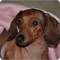 Adopt A Pet :: Grace - Bryan, TX