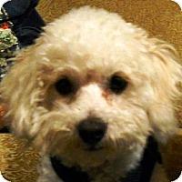 Adopt A Pet :: Shelli - La Costa, CA