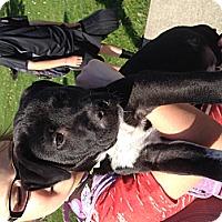 Adopt A Pet :: Denver - Marlton, NJ