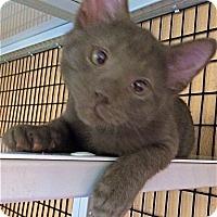 Adopt A Pet :: Necco - Deerfield Beach, FL