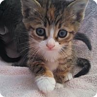 Adopt A Pet :: Leah and Liberace - Scottsdale, AZ