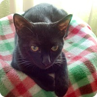 Adopt A Pet :: Rainbow - Fairborn, OH