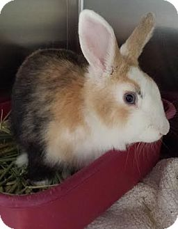 Other/Unknown Mix for adoption in Westminster, California - Casino