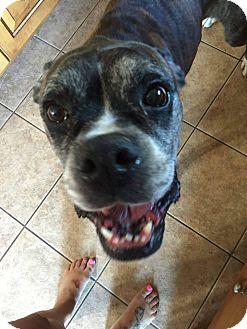 Boxer Dog for adoption in Boise, Idaho - Mack