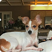 Adopt A Pet :: Charlie is very sweet! - Redondo Beach, CA