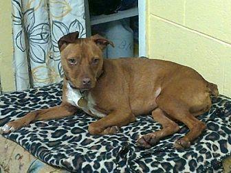 Terrier (Unknown Type, Medium)/Miniature Pinscher Mix Dog for adoption in Ellijay, Georgia - Star