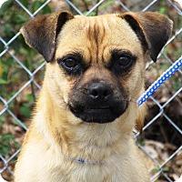 Adopt A Pet :: Pugsley - Oswego, IL