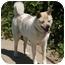 Photo 3 - Akita Dog for adoption in Hayward, California - Kinako