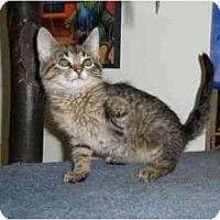 Adopt A Pet :: Felicity - Milwaukee, WI