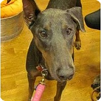 Adopt A Pet :: Simone--adopted!! - New Richmond, OH
