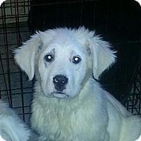 Adopt A Pet :: John and Yoko - Chicago, IL