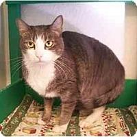 Adopt A Pet :: Zeus - El Cajon, CA