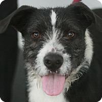 Adopt A Pet :: Rudy - Canoga Park, CA