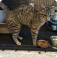 Adopt A Pet :: Roma - Ogallala, NE