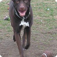 Adopt A Pet :: Champ - Northumberland, ON