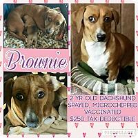 Adopt A Pet :: Brownie - Scottsdale, AZ