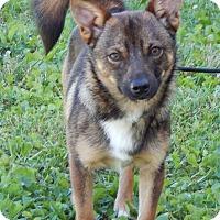 Adopt A Pet :: Ziggy(10 lb) GREAT Family Pet! - SUSSEX, NJ
