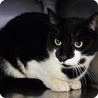 Adopt A Pet :: Oreo - New Milford, CT