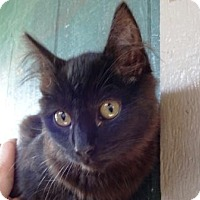 Adopt A Pet :: Shadow - Lathrop, CA