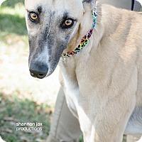Adopt A Pet :: Cascade - Gainesville, FL