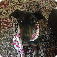 Adopt A Pet :: Tara - Matthews, NC