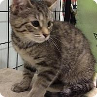 Adopt A Pet :: Esme - Acme, MI