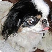 Adopt A Pet :: Darla - Aurora, CO