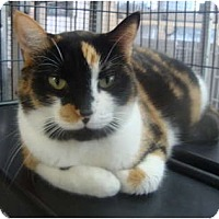 Adopt A Pet :: Ginger - Winter Haven, FL