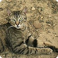 Adopt A Pet :: Sebastian - Columbia, MD